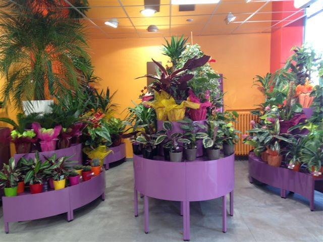 conception et fabrication agencement fleuriste et jardinerie. Black Bedroom Furniture Sets. Home Design Ideas