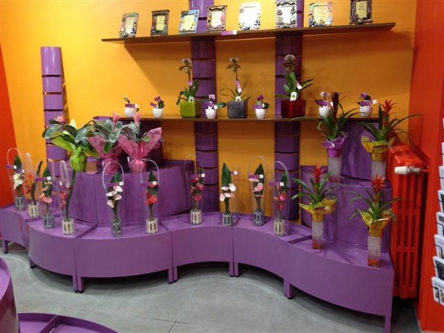 Composition de meubles spécifiques pour fleuristes et jardineries